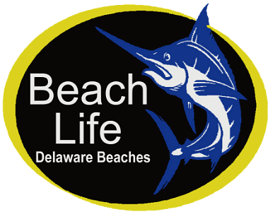 Beach Life- Mitchell